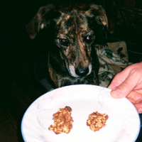 dog eating vegan pet treat