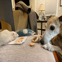 rat & dog with treat mix